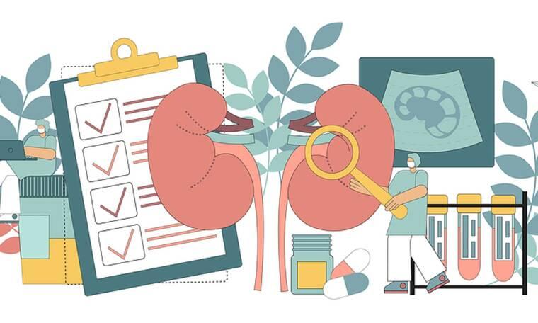 4 βότανα που ωφελούν τα νεφρά σας (video)