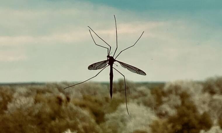 Σε τσιμπάνε συνεχώς τα κουνούπια; Ιδού ο λόγος