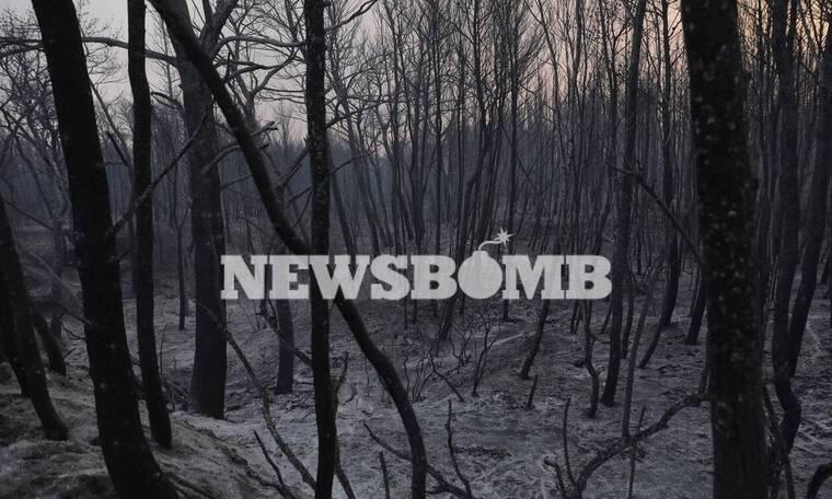 Φωτιά Βαρυμπόμπη: Οδοιπορικό του Newsbomb.gr στα καμένα - Εικόνες ανείπωτης θλίψης και καταστροφής