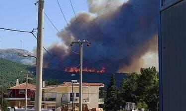 Φωτιά ΤΩΡΑ στα Βίλια στη θέση Προφήτης Ηλίας - Πνέουν άνεμοι έως 8 μποφόρ