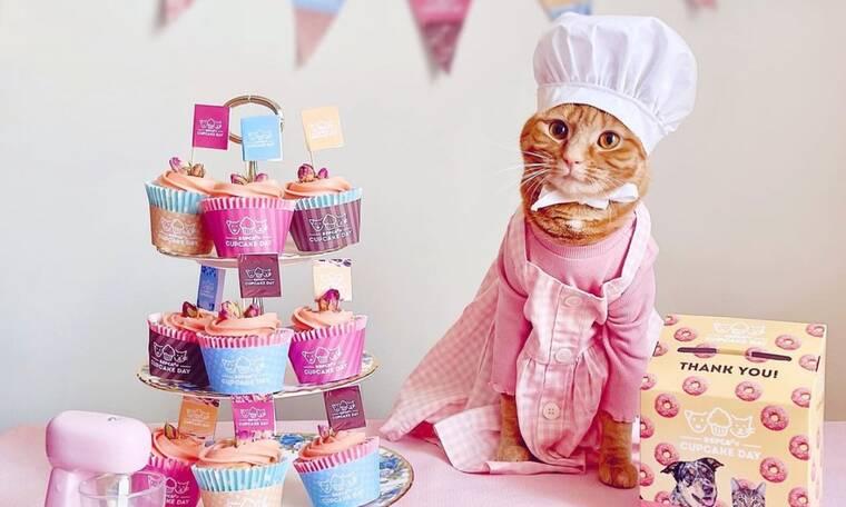 Honey - Η γάτα που της αρέσει να φτιάχνει κέικ και να ποζάρει